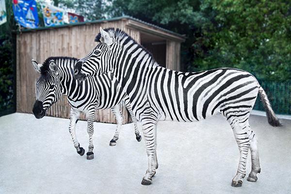 Зоопарк (2)