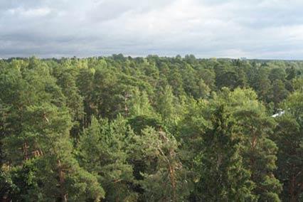 Санаторий Северная Ривьера,Вид на лес