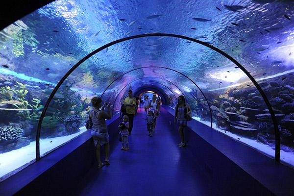 Отель Боспор,Анапский морской аквариум