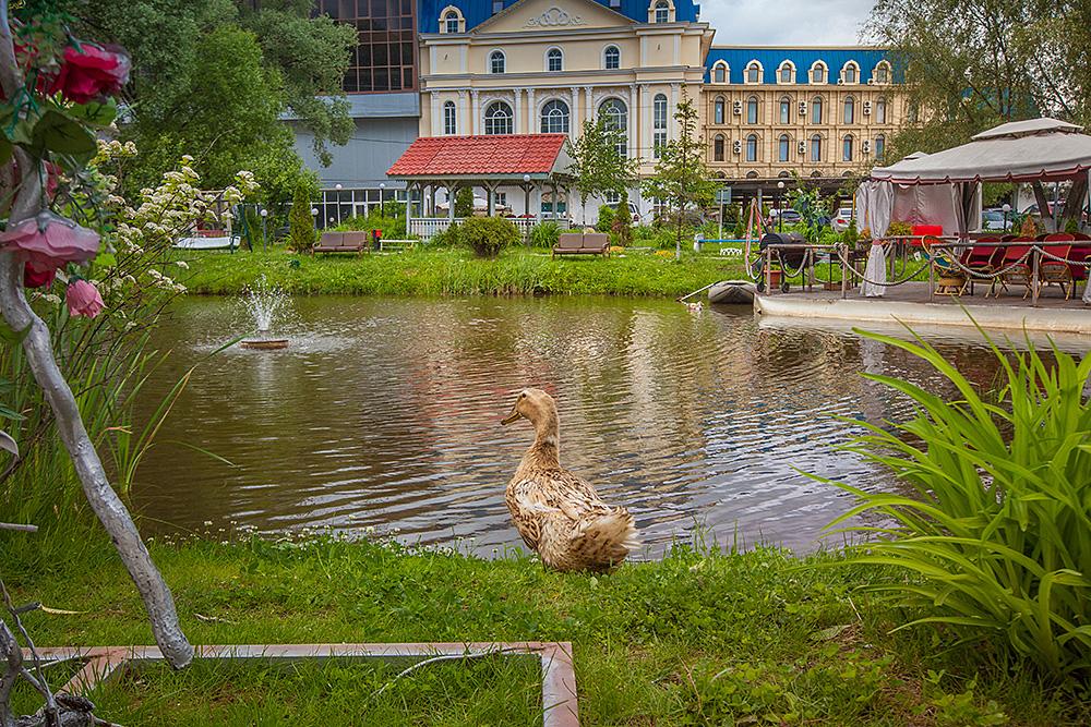 Парк-отель Vnukovo Village Park Hotel,IMG_1393