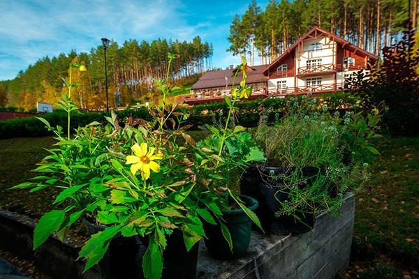 Санаторий Россия (Белокуриха),Эко-отель Эхо