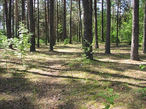 Санаторий Приозерный,Лес на территории